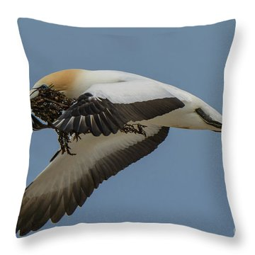 Throw Pillow featuring the photograph Gannets 1 by Werner Padarin