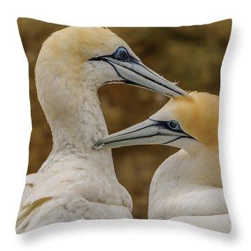 Gannets 4 Throw Pillow
