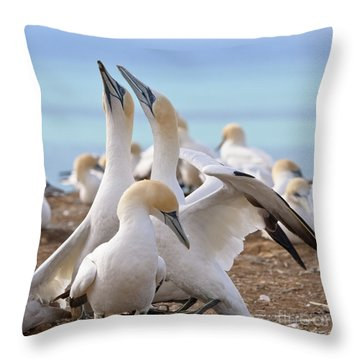 Gannets Throw Pillow