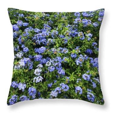 Garden Bed Of Phlox Blossoms Throw Pillow