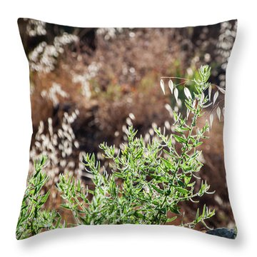 Garden Contre Jour 2 Throw Pillow