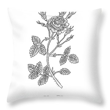 Garden Rose Botanical Drawing Black And White Throw Pillow