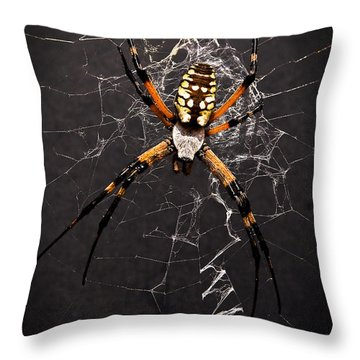 Garden Spider And Web Throw Pillow by Tamyra Ayles