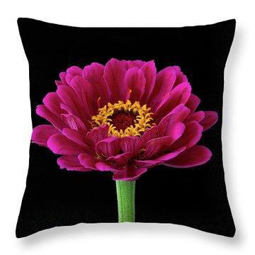 Garden Zinnia Throw Pillow