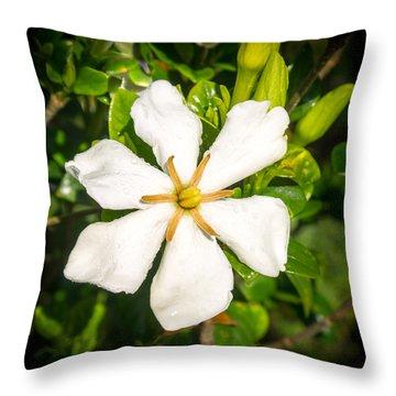 Gardenia In The Morning Sun Throw Pillow