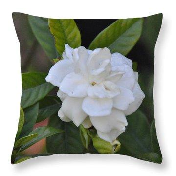 Throw Pillow featuring the photograph Gardenia by John Black