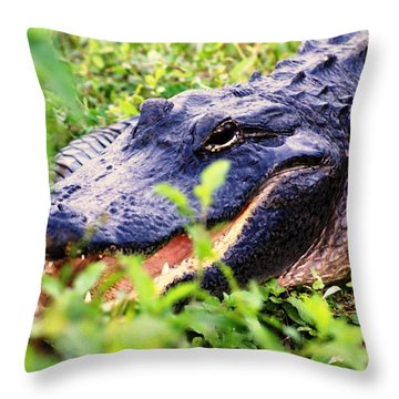Gator 1 Throw Pillow by Marty Koch
