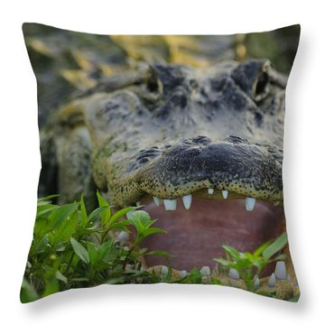 Gator With Worn Teeth Throw Pillow