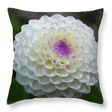 Gaylen Rose Dahlia 1 Throw Pillow