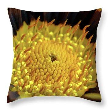 Gazania Macro Throw Pillow