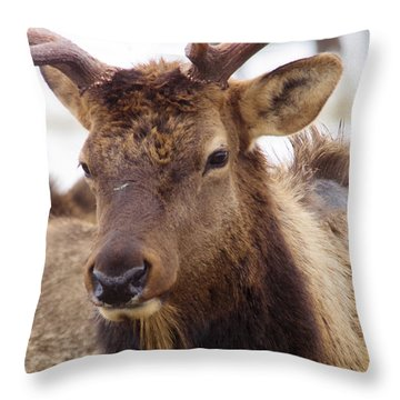 Throw Pillow featuring the photograph Gaze From A Bull Elk by Jeff Swan