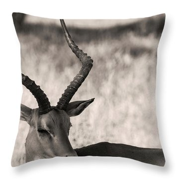 Gazella Throw Pillow