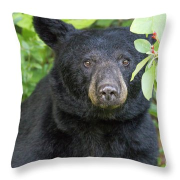 Gazing Black Bear Throw Pillow