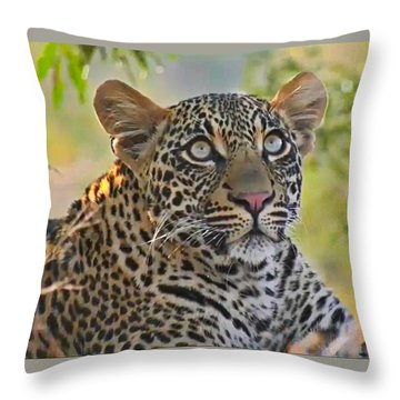 Gazing Leopard Throw Pillow