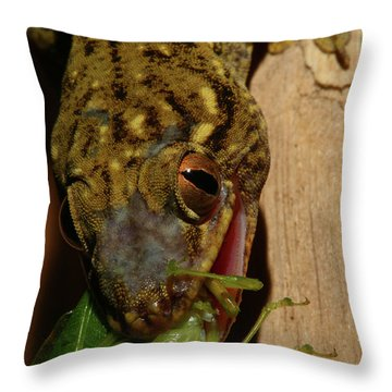 Gecko Feed Throw Pillow