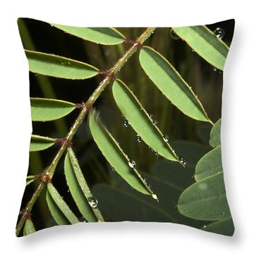 Throw Pillow featuring the photograph Gentle Morning Dew by Karen Musick