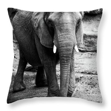 Throw Pillow featuring the photograph Gentle One by Karol Livote