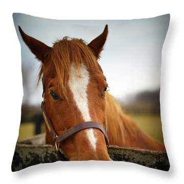 Throw Pillow featuring the photograph Genuine Reward by Shane Holsclaw