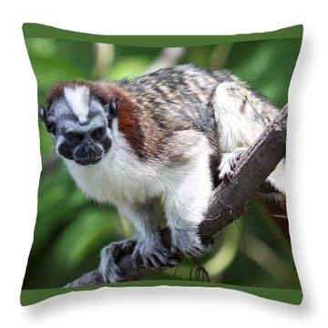 Geoffroy's Tamarin Saguinus Geoffroyi Throw Pillow