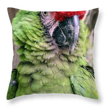 George The Parrot Throw Pillow