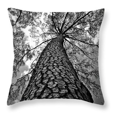 Georgia Pine Throw Pillow by Dan Wells