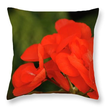 Throw Pillow featuring the photograph Geranium  by Cristina Stefan