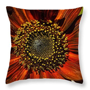 Gerber Daisy Full On Throw Pillow