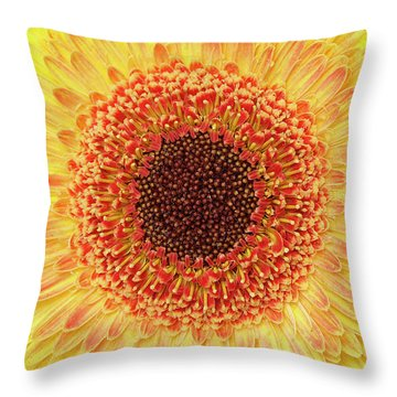 Gerber Daisy Throw Pillow