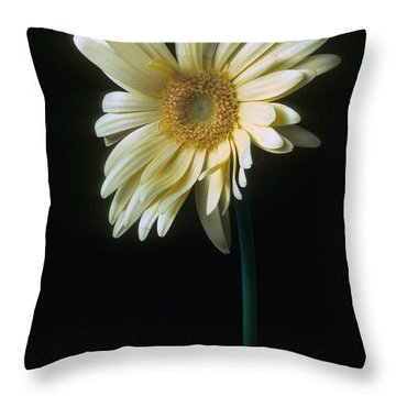 Gerber Daisy Throw Pillow by Laurie Paci