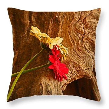 Gerber Daisy On Driftwod Throw Pillow