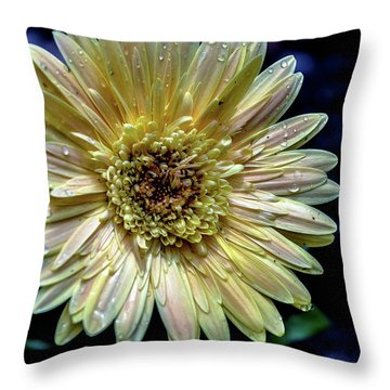 Throw Pillow featuring the photograph Gerber by Karen Kersey