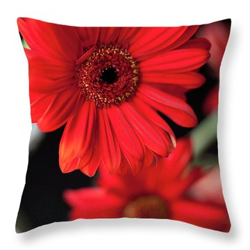 Gerbera Throw Pillow by Amanda Barcon
