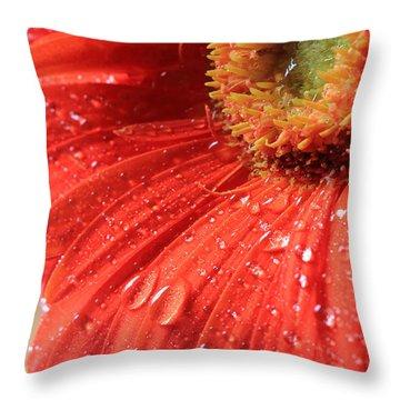 Gerbera Daisy After The Rain Throw Pillow