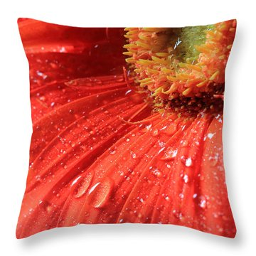 Gerbera Daisy After The Rain Throw Pillow