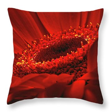 Throw Pillow featuring the photograph Gerbera Daisy In Red by Sharon Talson
