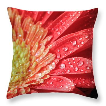 Gerbera Daisy Macro Throw Pillow
