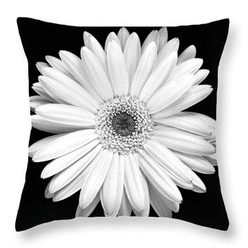 Single Gerbera Daisy Throw Pillow