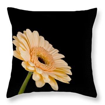 Gerbera Daisy On Black Throw Pillow