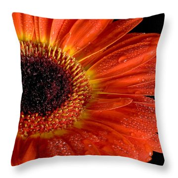 Gerbera I Throw Pillow