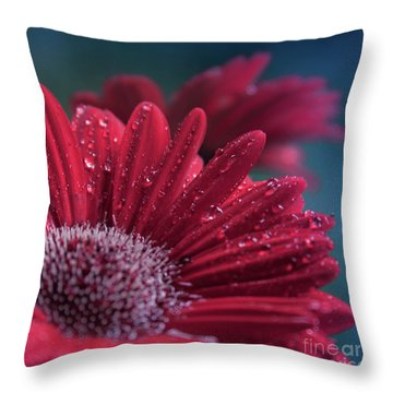 Throw Pillow featuring the photograph Gerbera Red Jewel by Sharon Mau