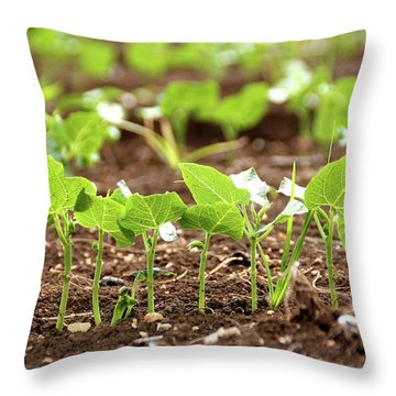 New Sprouts In The Promised Land Throw Pillow by Yoel Koskas