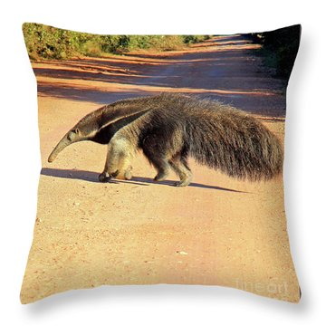 Giant Anteater Crosses The Transpantaneira Highway In Brazil Throw Pillow