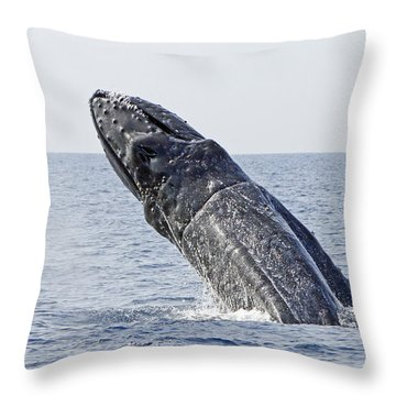 Giant Breach Throw Pillow by Shoal Hollingsworth