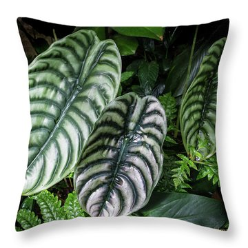 Throw Pillow featuring the photograph Giant Calladium Leaves by Richard Goldman