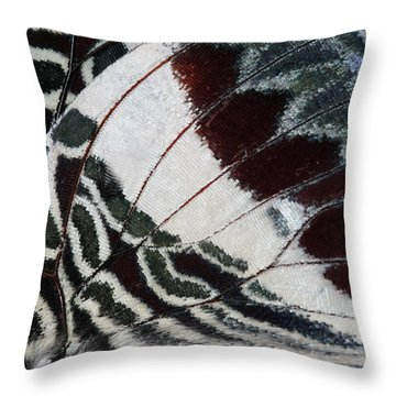 Giant Charaxes Butterfly Throw Pillow
