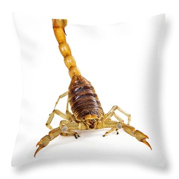 Giant Desert Hairy Scorpion Looking Into Camera Throw Pillow