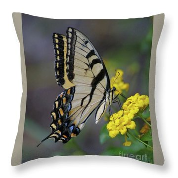 Giant Eastern Swallowtail Throw Pillow
