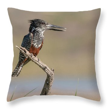 Giant Kingfisher Throw Pillow