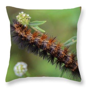 Giant Leopard Moth Caterpillar Throw Pillow