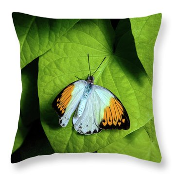 Throw Pillow featuring the photograph Giant Orange Tip Butterfly by Tom Mc Nemar
